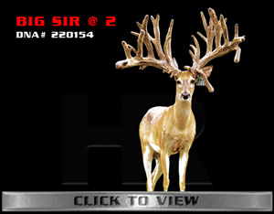 Big Sir - TX Whitetail Buck bred by James Butler at High Roller Whitetails - Center Texas
