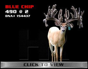 Blue Chip - TX Whitetail Buck bred by James Butler at High Roller Whitetails - Center Texas