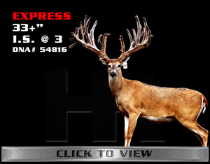 Express - TX Whitetail Buck bred by James Butler at High Roller Whitetails - Center Texas