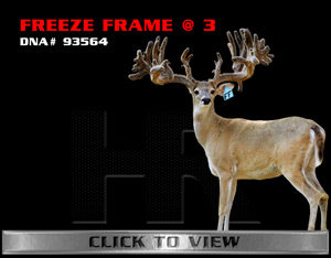 Freeze Frame - TX Whitetail Buck bred by James Butler at High Roller Whitetails - Center Texas