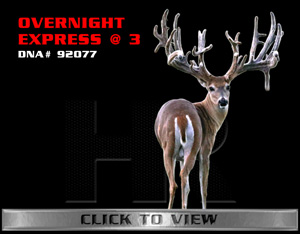 Overnight Express - TX Whitetail Buck bred by James Butler at High Roller Whitetails - Center Texas